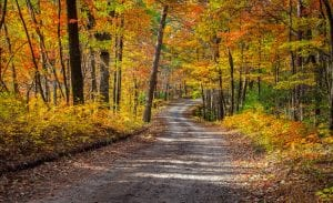 A winding road surrounded in beautiful fall colored trees. Colors of orange, red and green